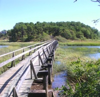 Wellfleet Marsh Cape Cod