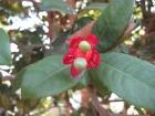 Kerala Garden