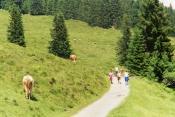 Swiss hike