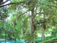 New Braunfels Texas Landa Park